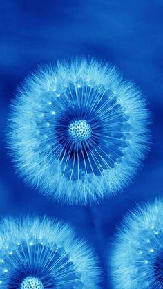 New flowers blue wallpaper nature Ideas Im Blue, Blue Green, Blue And White, Color Blue, Cobalt Blue, Cerulean, Cobalt Glass, Blue Art, Periwinkle