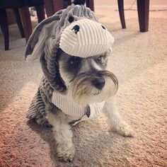 DIY Pet Costume Ideas | POPSUGAR Smart Living