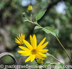Puffer, Superfood, Dip, Wordpress, Plants, Apple Tree, Harvest, Native Americans, Lawn And Garden
