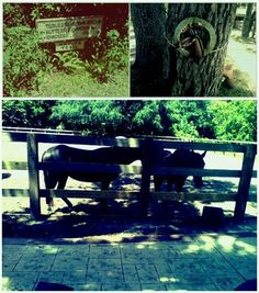 Enchanted Forest Elaine Gordon Park