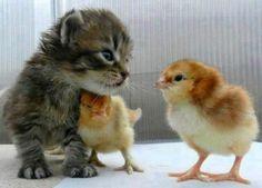 Pequeños Amigos...