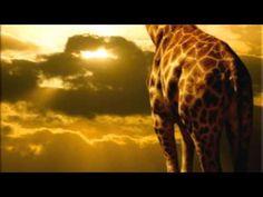 African Sunrise--performed by JOHN DENVER.wmv