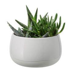 SUCCULENT Plant with pot IKEA