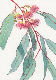 Watercolour of eucalyptus leaves and flowers