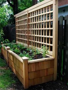 Another idea that small yards - I could reuse some of the lattice work we're taking off of the deck for some climbing vines.