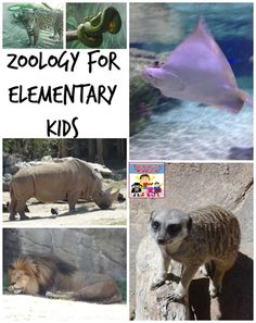 Zoology for kids - Adventures in Mommydom #freeprintables