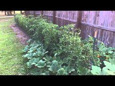 ▶ Brunswick County NC Gardening - Green IRT plastic mulch and drip tape irrigation - YouTube