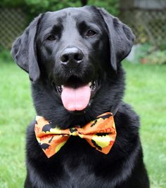 Halloween Pet Bow Tie by PawChicCanada on Etsy, $13.00