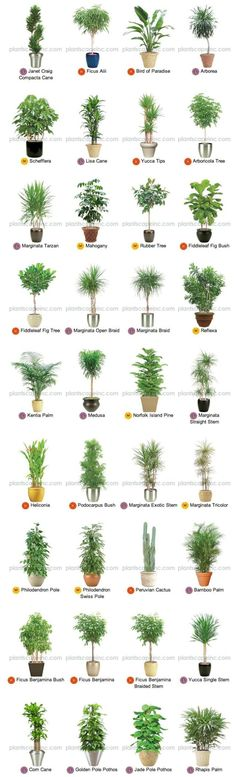 13 ways to use plants to make your home look LOVELY  1. For a start, know what you're looking for with this handy chart of plants and their sizes - high, medium and low!