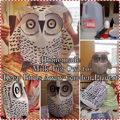 This homemade milk jug owl to keep birds away garden project is a frugal yet create craft that is a tool to safeguard young fruit and vegetable Energetic Tips: Garden Tool Crafts Dads garden tool shed country living.Garden Tool Fun garden to Plastic Milk Bottles, Plastic Bottle Crafts, Milk Jugs, Keep Birds Away, Milk Jug Crafts, Garden Owl, Anniversaire Harry Potter, Owl Crafts, Animal Projects