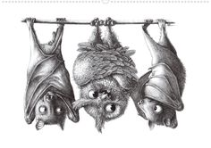 Freche und lustige Tiere. Meisterhaft, mit ironischem Humor - klassisch in Bleistift und Tusche - zu Papier gebracht.