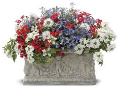 Similar to my hanging baskets. I have red & blue lobelia & white verbena