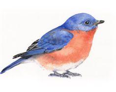 Nuthatch watercolor painting ORIGINAL Watercolor by LouiseDeMasi