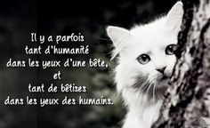 #citation  #chat  #cat  #humanite  #yeux  #bete  #betise  #humain
