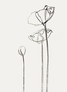 Icelandic Poppies line drawing by Bernadette Pascua Plant Drawing, Painting & Drawing, Drawing Flowers, Poppy Drawing, Flower Drawings, Flowers Wallpaper, Doodle Drawing, Poster Photo, Icelandic Poppies