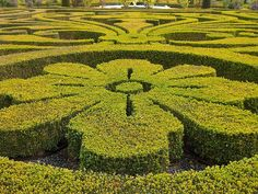 Flower topiary. Photo by ingridf_nl via flickr.