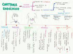 Vem ver esse mapa mental maneiro, que vai te ajudar a conferir todos os conceitos importante sobre Controle Endócrino!