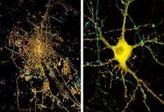neuron-cities-5.jpg (580×400)