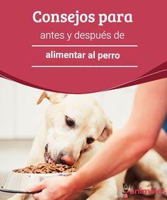 Consejos para antes y después de alimentar al perro como dueños no siempre sabemos cómo actuar antes y después de alimentar al perro (o a los perros si tenemos más de uno). Entérate más en este post. #alimentar #perro #alimentación