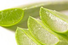 Aloe vera  Esta receta es muy sencilla de preparar para es muy efectiva para dar una buena limpieza a nuestro colon. Sus efectos nos ayudan a eliminar las toxinas de nuestro cuerpo, favorece la pérdida de peso  también funciona como un anticancerígeno.  Ingredientes  2 hojas de sábila 5 limones 5 cucharaditas de miel 1 litro de agua ¿Cómo prepararlo?  En una licuadora debes mezclar  la pulpa de la sábila picada en trozos pequeños,  el jugo de los limones, el agua y la miel. Bate unos minutos…