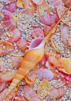 Shells in pink & orange.