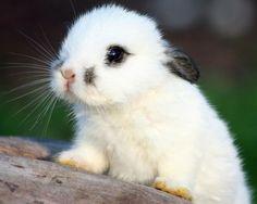 Fuzzy bunny!