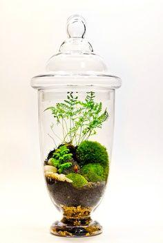 Comment créer un petit jardin chez soi?