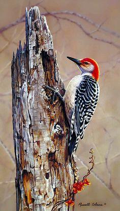 Red Bellied Woodpecker - Art of Russell Cobane painting Wildlife Paintings, Wildlife Art, Paintings Of Birds, Pretty Birds, Beautiful Birds, Watercolor Bird, Watercolor Paintings, Realistic Oil Painting, Bird Drawings