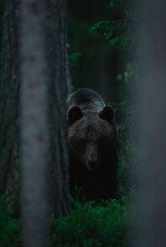 Wild Forests of Finland - Nature Photographer Morten Hilmer