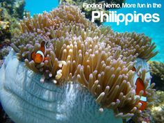 FINDING NEMO. More FUN in the Philippines! Philippines Tourism, Visit Philippines, Places Around The World, Around The Worlds, Tourism Department, Finding Nemo, Timeline Photos, More Fun, Underwater