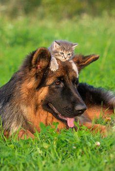 #dog #cat #kitten #cute #zolux