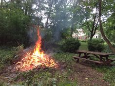 Burning Buckthorn down in the back woods