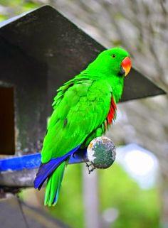 Guiajato blog: passaros silvestres