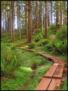 Tillamook Head Trail | from Seaside to the Cannon Beach Trail on down to Ecola State Park. Oregon