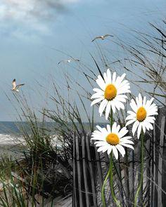Η ζωή αποτελείται από μικρά πράγματα...  Ο ήλιος δίνει χρώμα στα λουλούδια, κι η τέχνη δίνει χρώμα στη ζωή!!!