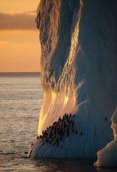 Chinstrap penguins on iceberg, Antarctica