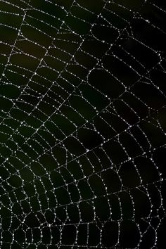 Micro Cosmos' s Thread Living Forces...From One Infinite Matrix !... http://samissomarspace.wordpress.com