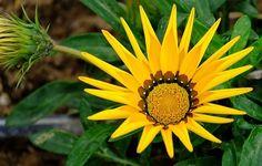 september verjaardag bloemen betekenis