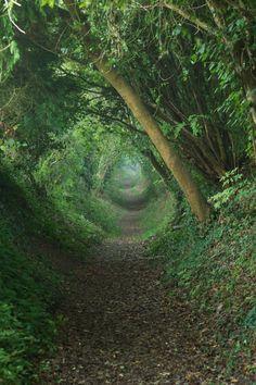 duncangeorge: Tunnel