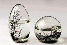 Self-Sustaining EcoSphere by NASA: A Fascinating Decoration for Your Home Low Maintenance Pets, Self Sustaining, Aquatic Ecosystem, Green Gifts, Sculpture, Art Of Living, Living Room, Glass Ball, Small World