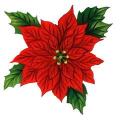 RED POINSETTIA *