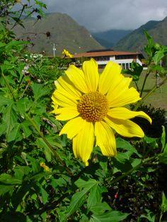 Una bella flor en  Venezuela! <3
