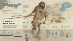 Mi Proyecto del curso Crea una infografía que hará historia - Fernando G. Baptista #infographics #nationalGeographic #infografia Human Evolution, Primitive Survival, Extinct Animals, How To Create Infographics, Stone Age, Mammals, Mythology, Map, History