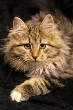 ผลการค้นหารูปภาพสำหรับ autumn coloured cat