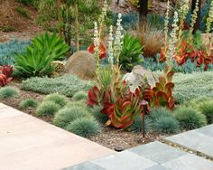 Gardening In Desert Areas Design, Pictures, Remodel, Decor and Ideas