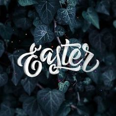 """What does Easter mean to you?  One of my favourite verses in the Bible is Philippians 2: 4 - """"let each of you look not only to his own interests, but also to the interests of others."""" Putting other people's interests first is something I strive to do as a husband, father, friend and also my business, specifically on social media. I try to think how each post can help others, through encouragement, learning, advice or just entertainment. Looking at others interests over your own is the…"""