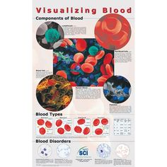 POSTER: Visualizing blood Blood Components, Structure And Function, Red Blood Cells, Disorders, Science, Poster, Flag, Posters, Movie Posters