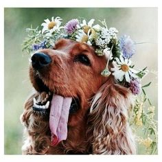 deff want my dog in my wedding, flower crown around neck of course
