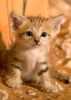 Kittens with awkwardly large ears and/or feet? Yes, please!