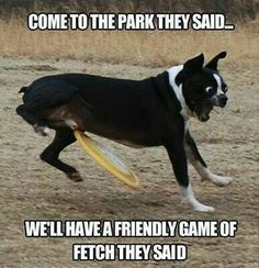 Unlucky Dog: | 36 Dog Pictures On The Internet That Are Never Not Funny